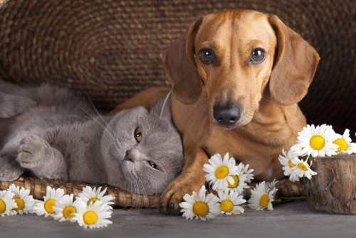Separazioni: animali domestici considerati parte della famiglia ed equiparati ai figli.